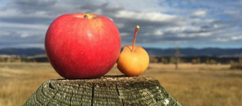 Photo for: Hand Crafted Spirits and Ciders from Montana